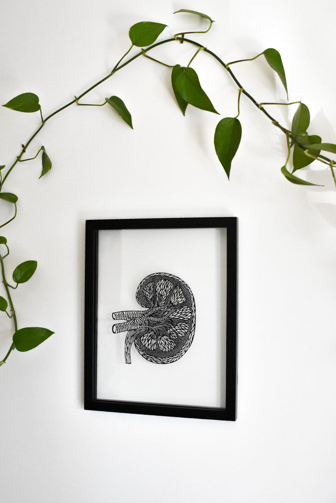 Anatomical Kidney Papercutting Artwork
