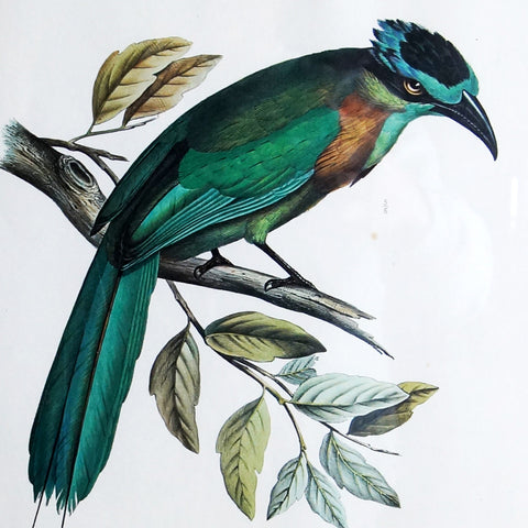 Ornithological Prints - Smith & Stocking  - 1