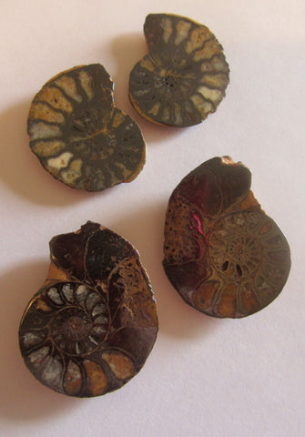 Ammonite Pairs, Pyritized