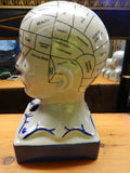 "Phrenology -13"" Head"
