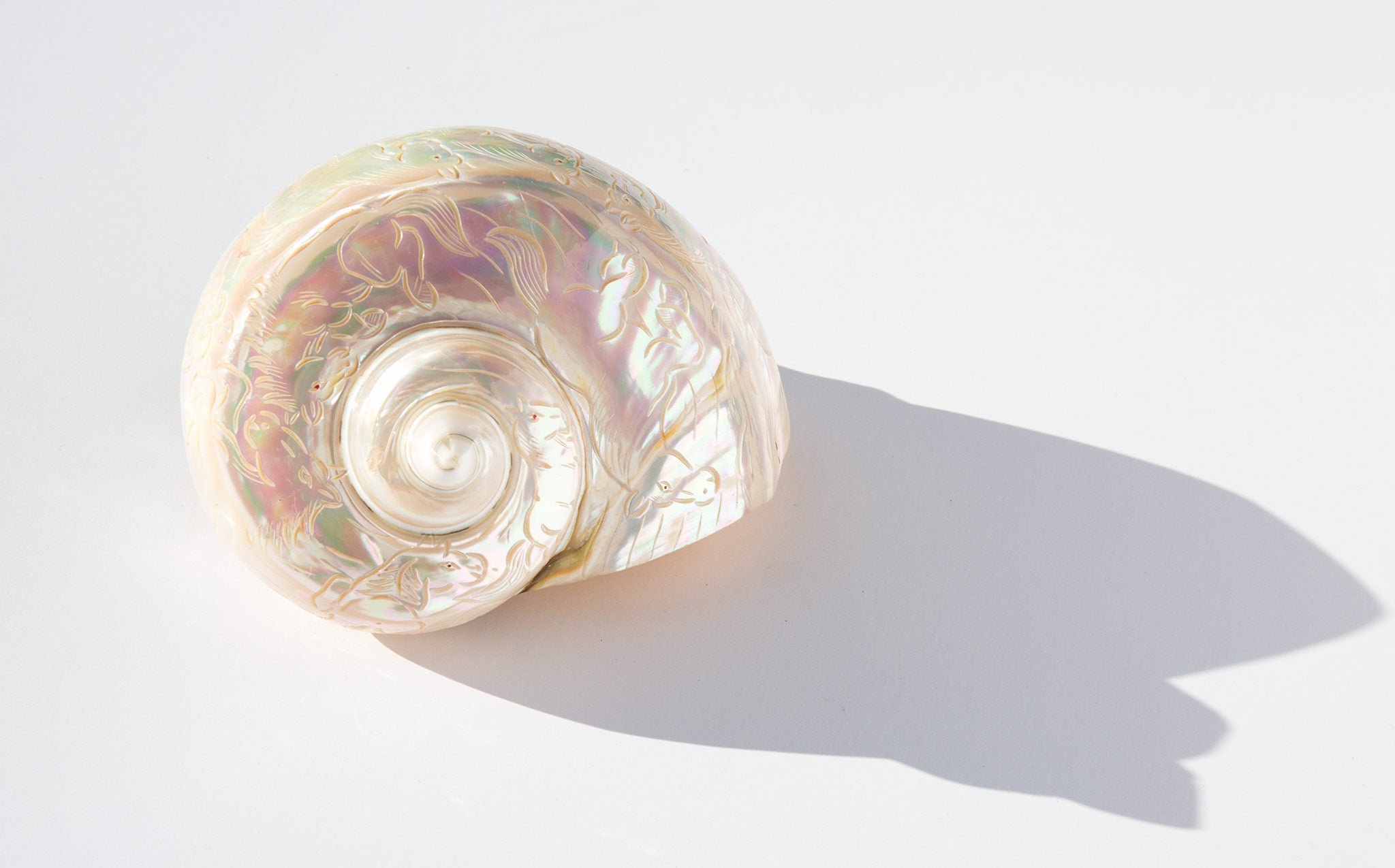Iridescent Engraved Turbo Marmoratus Shell