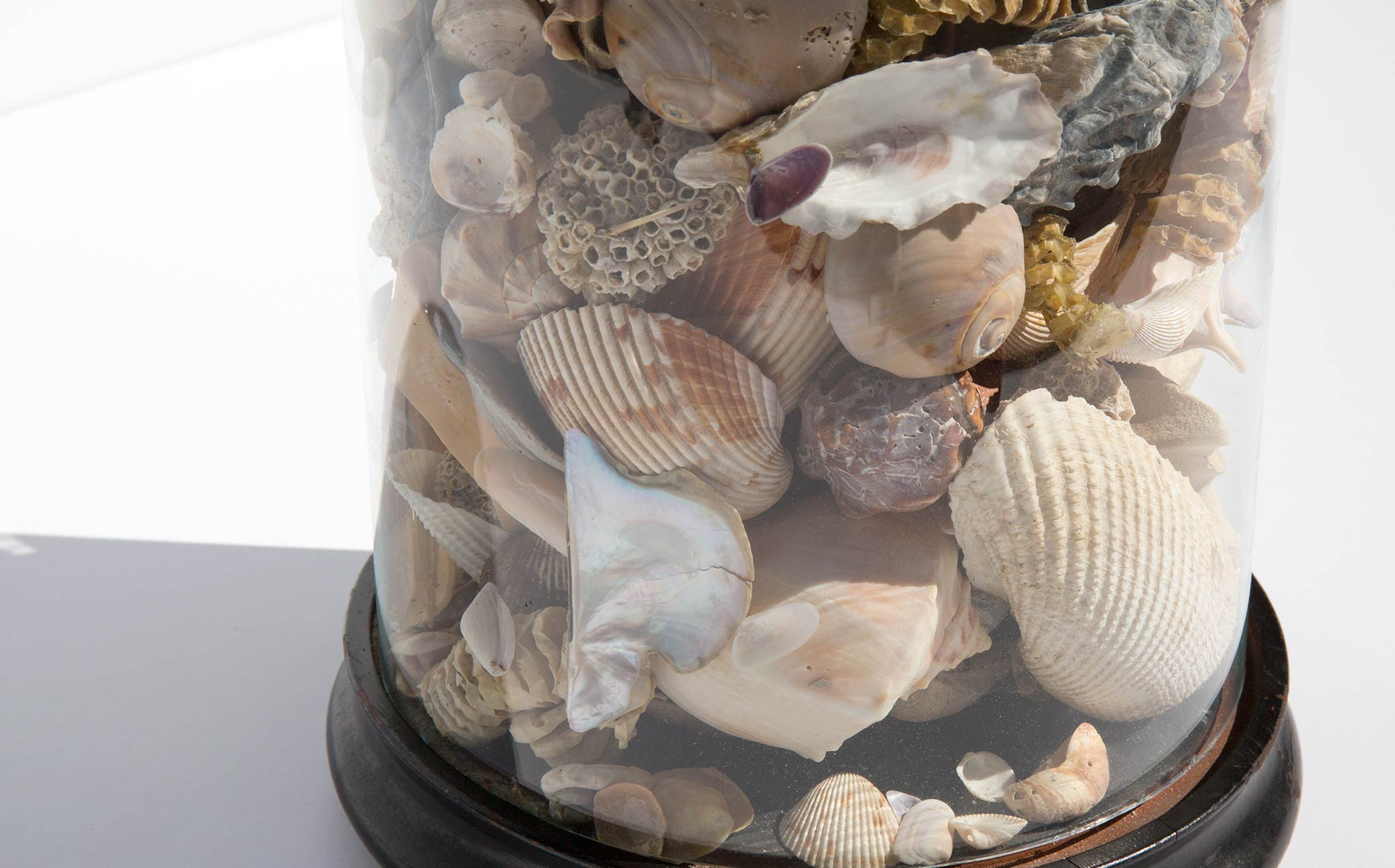 Specimen Dome With Shell Collection