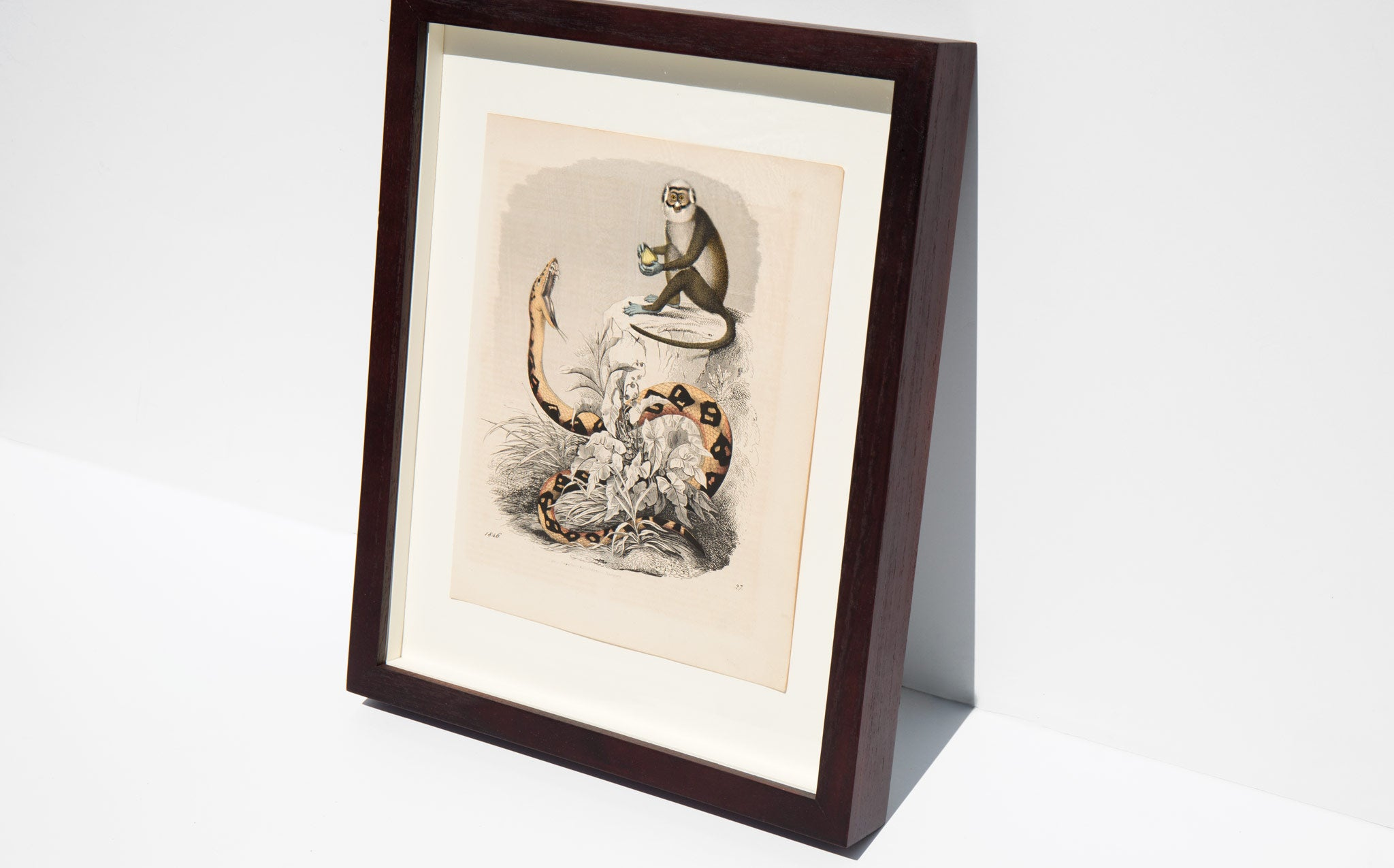 Antique Hand Colored Animal Lithograph