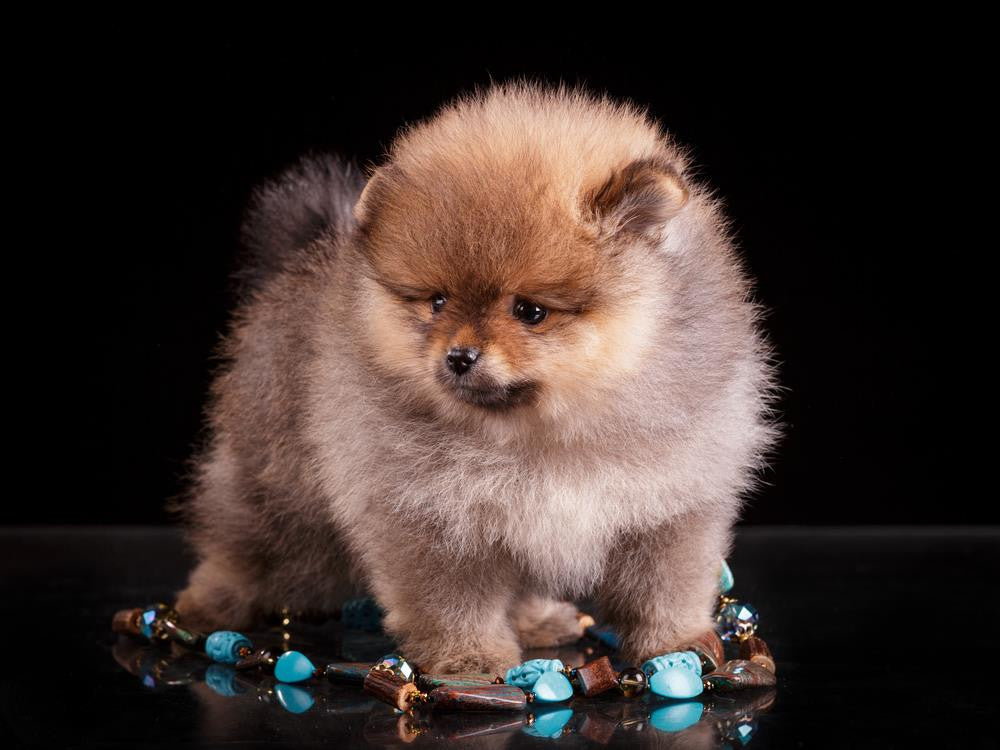 Eliminate Your Fears And Pick Up Crystals For Dogs Today