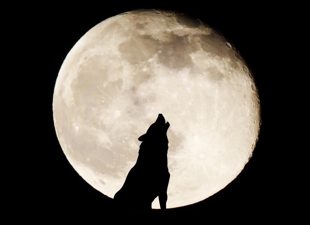 Full Wolf Moon January is Here: What can your crystals do?