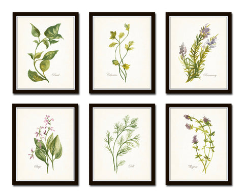 Watercolor Botanical Herbs Print Set No. 1