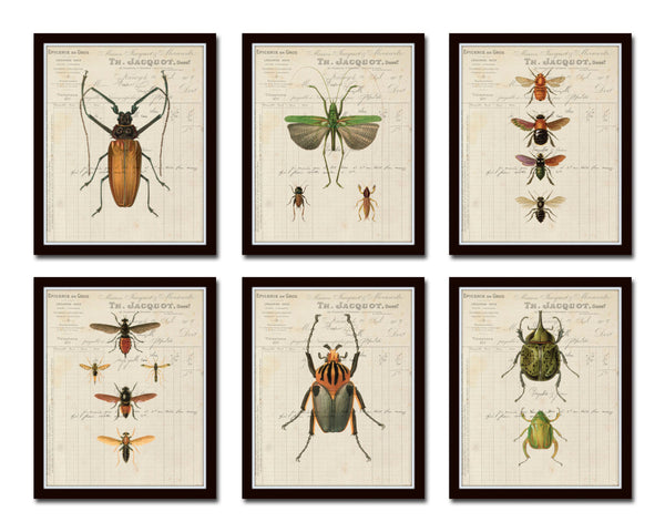 French Insect Study Print Set No. 1