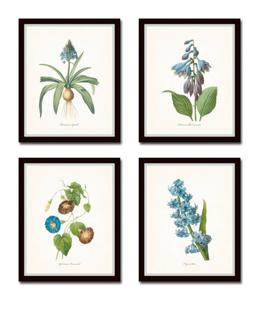 Blue Redoute Floral Botanical Print Set No. 3