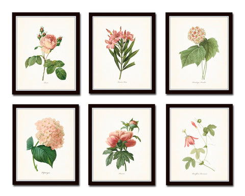 Pink Botanical Print Set No. 3 - Redoute Botanical Prints