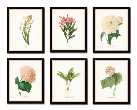 Botanical Garden Print Set No. 10 - Redoute Botanical Prints