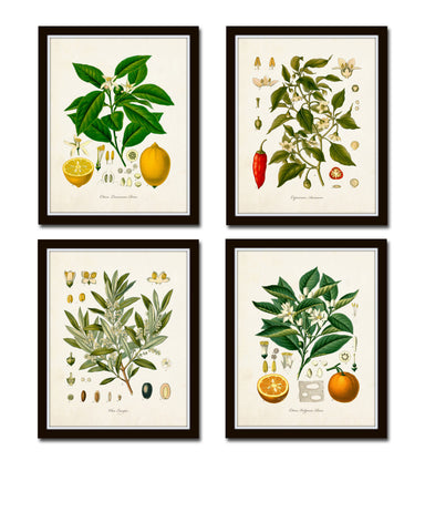Vintage Kohler Fruit Print Set No. 20