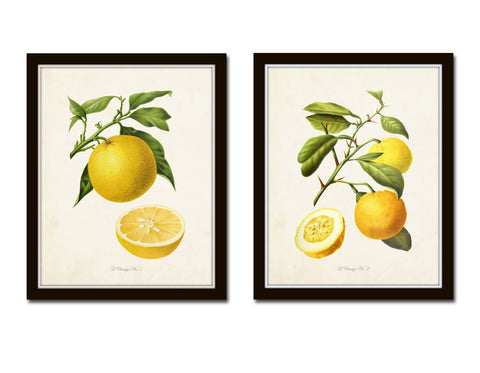 Antique French Oranges Print Set No. 2