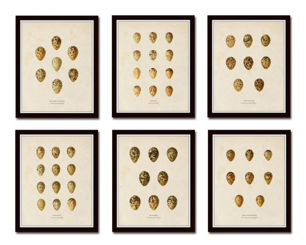Bird Eggs Print Set No. 1