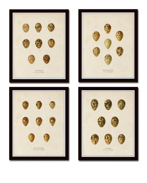 Bird Eggs Print Set No. 2