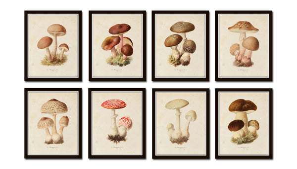 Mushroom Vegetable Art Print Set No. 1