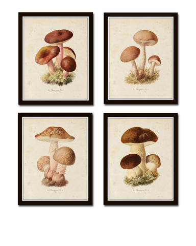 Mushroom Vegetable Art Print Set No. 2