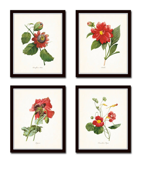 Red Redoute Floral Botanical Print Set No. 5
