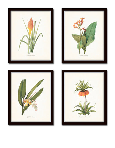 Tropical Botanical Print Set No. 7