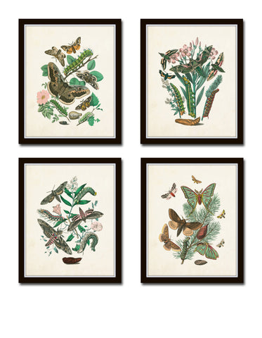 Antique Moths Print Set No. 1