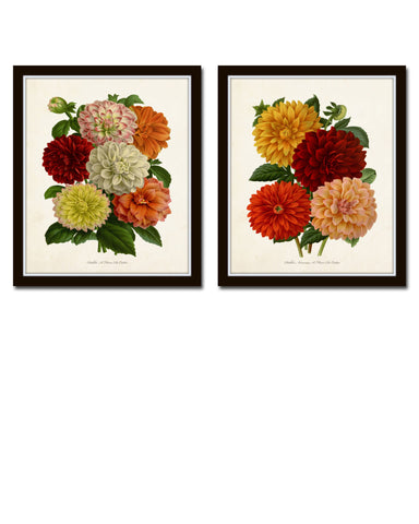 Antique French Dahlias Print Set No. 1