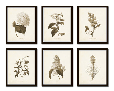 Sepia Flowers Botanical Print Set No.1