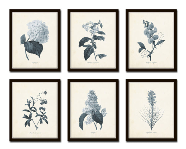 Blue Gray Flowers Botanical Print Set No.1