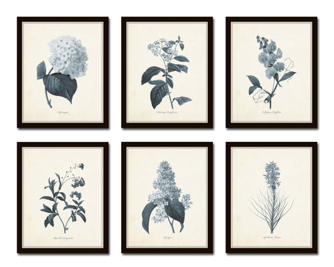 Blue gray flowers botanical print set no 1