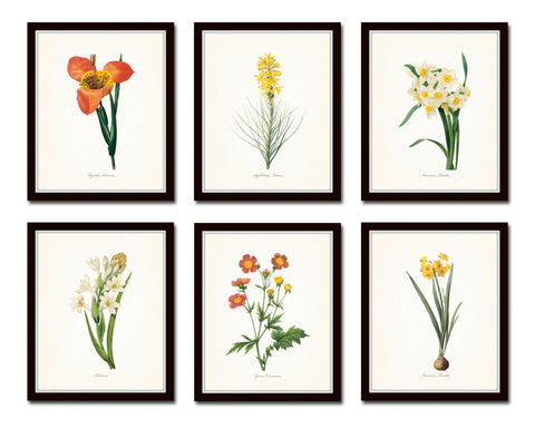 Botanical Garden Floral Print Set No. 16