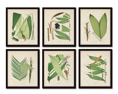 Palm Fronds Print Set No. 2