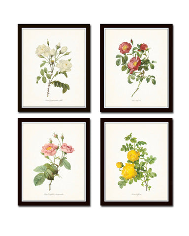Redoute Roses Floral Botanical Print Set No. 6