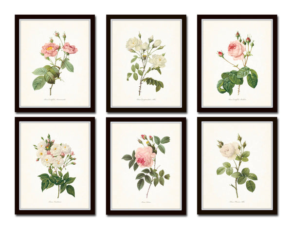 Redoute Roses Floral Botanical Print Set No. 5