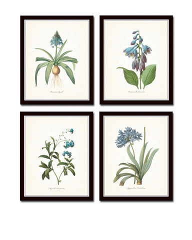 Blue Botanical Print Set No. 7 - Fine Art Giclee Prints