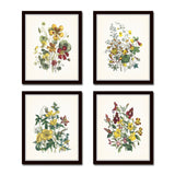 Vintage Wildflowers Botanical Print Set No. 5