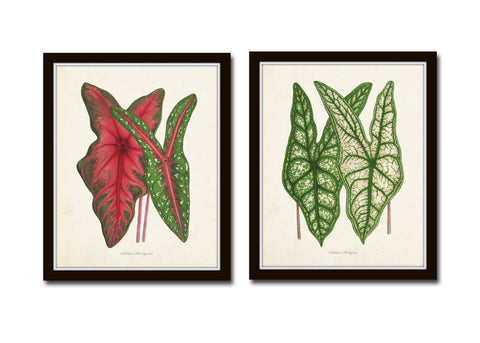 Tropical Leaves Botanical Print Set No. 5