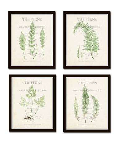 Vintage Ferns Collage Print Set No. 3