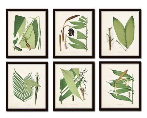 Palm Fronds Print Set No. 1