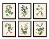 Audubon Birds Print Set No. 24
