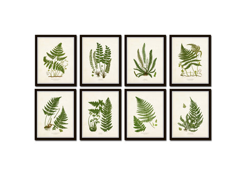 Vintage Fern Print Set No. 34 - Fine Art Giclee Prints