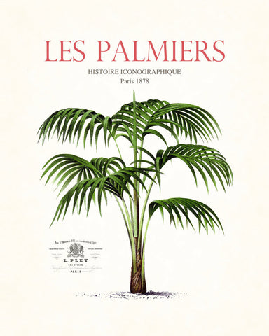 Vintage French Palm Tree Collage No.7 - Botanical Print
