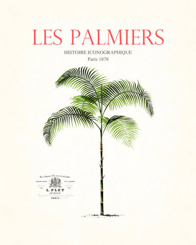 Vintage French Palm Tree Collage No. 13 - Botanical Print