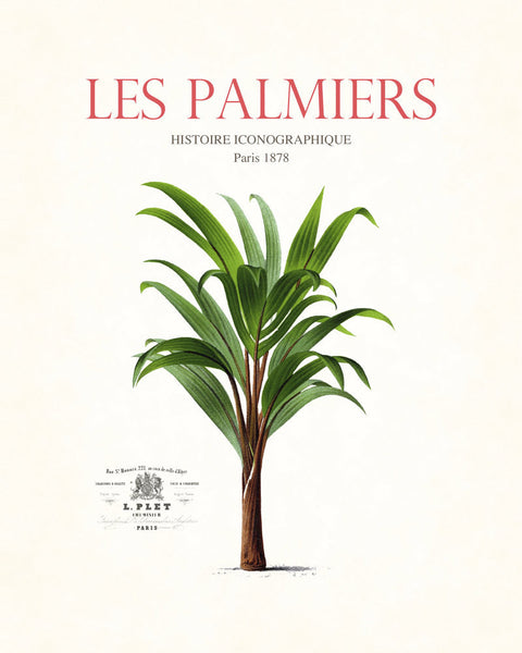 Vintage French Palm Tree Collage No. 15 - Botanical Print
