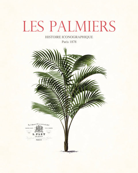 Vintage French Palm Tree Collage No. 34 - Botanical Print