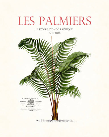 Vintage French Palm Tree Collage No. 36 - Botanical Print
