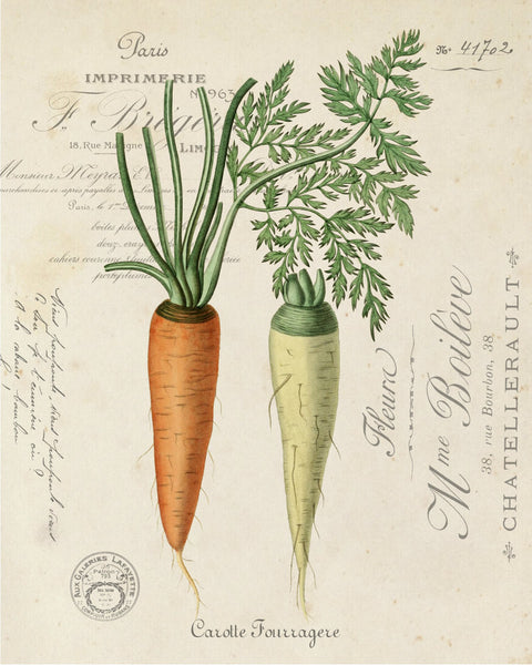 Vintage French Carrot Collage - Botanical Art Print
