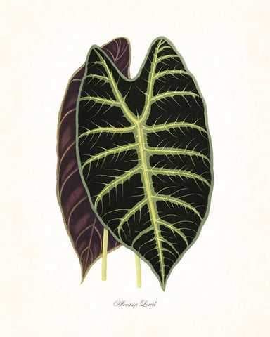 Vintage Botanical Tropical Leaf Series No. 4