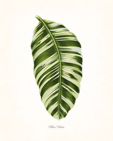 Vintage Botanical Tropical Leaf Series No. 1