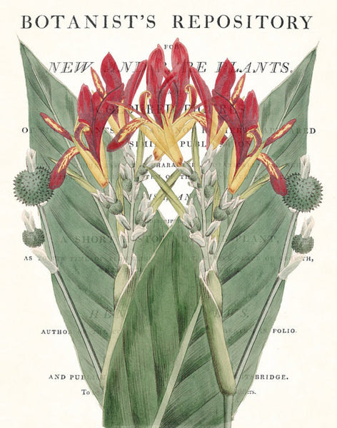Vintage Botanical Canna Collage No. 30