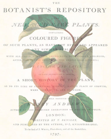 Vintage Botanical Apple Collage No. 2