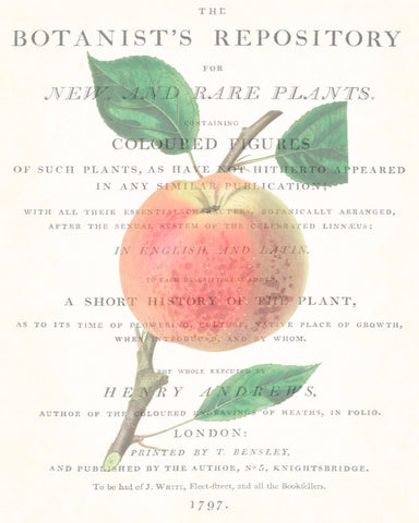 Vintage Botanical Apple Collage No. 4