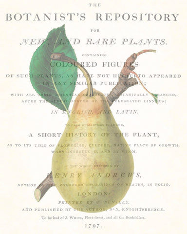 Vintage Botanical Pear Collage No. 2
